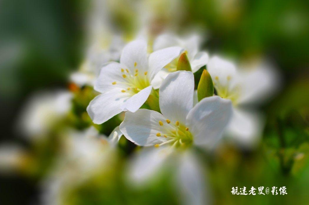 那麼純白,那麼溫柔,那麼靜謐,懸在空中, 空氣中散發清香~美!
