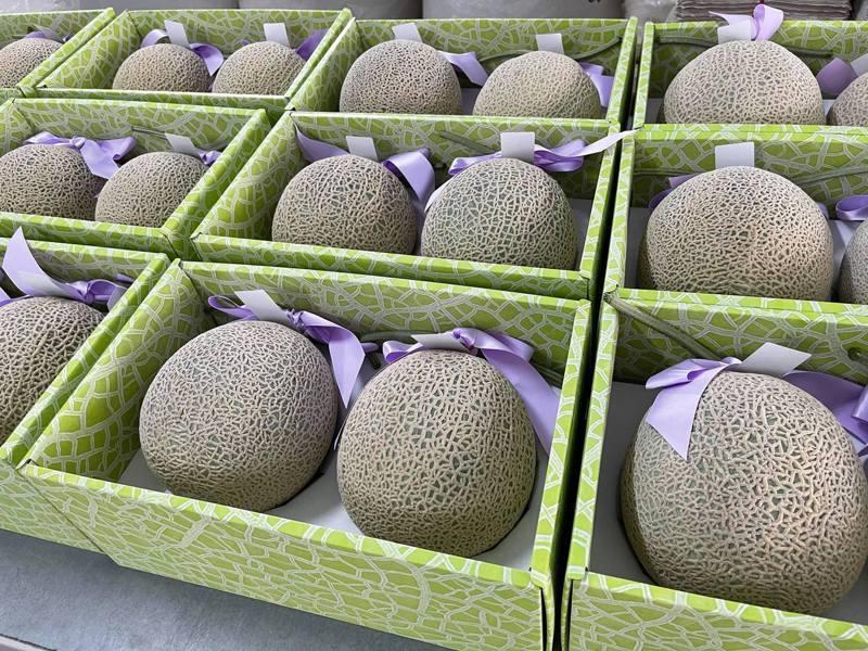 新冠肺炎疫情全國爆發衝擊端午節送禮市場;往年端午節前一兩個月,送禮市場活絡暢旺,但今年不少高價水果產季雖然正好搭上送禮時間,但也正好撞上這波疫情,農民心慌、焦慮不已。圖為日本阿露斯哈密瓜。圖/農民提供