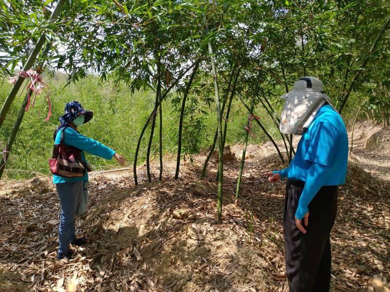 綠竹筍主產區台南乾旱嚴重,農業局會勘農損超過兩成。記者周宗禎/翻攝