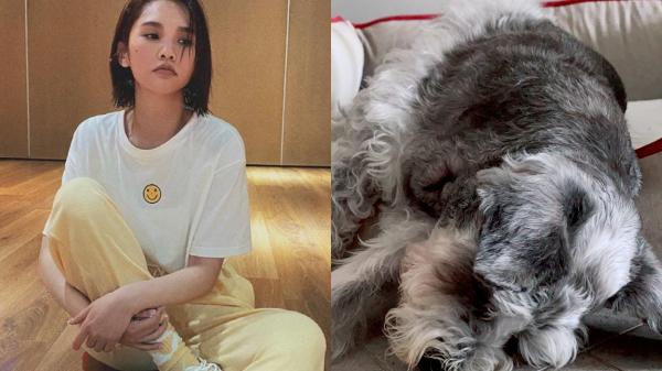 楊丞琳愛犬Yumi。 圖/擷自楊丞琳臉書