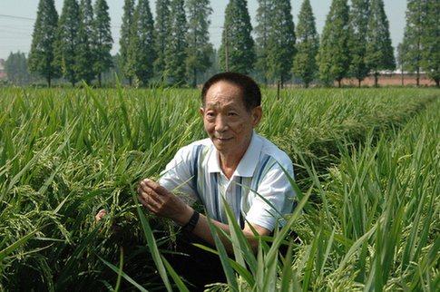 大陸雜交水稻之父袁隆平。圖源:人民網