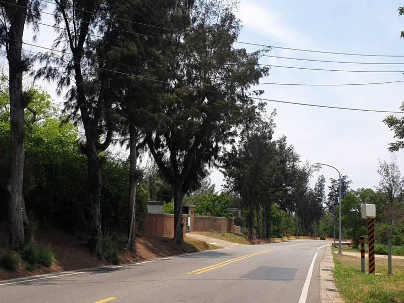 環島北路一段的木麻黃等樹木將於5月27日起展開既有行道樹遷移及移除。記者蔡家蓁/攝影