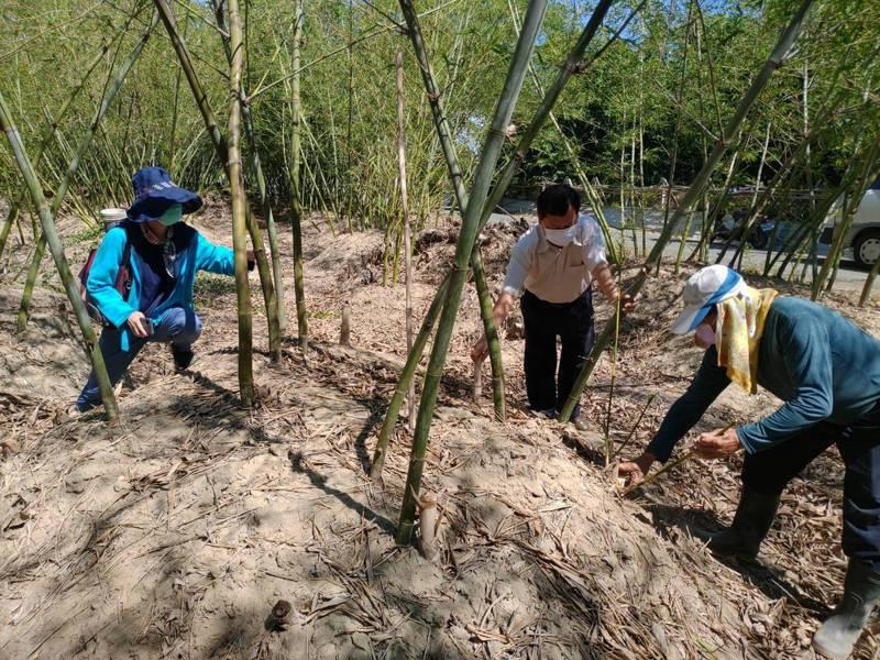 降低染疫風險, 南市府延長荔枝及綠竹筍現金救助受理。圖 /台南市政府農業局提供