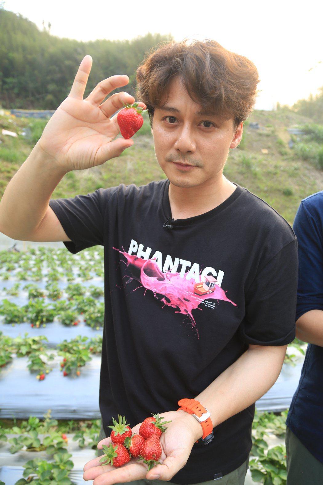 只要旅伴對了,採草莓也可以玩出新鮮感。圖/亞洲旅遊台提供