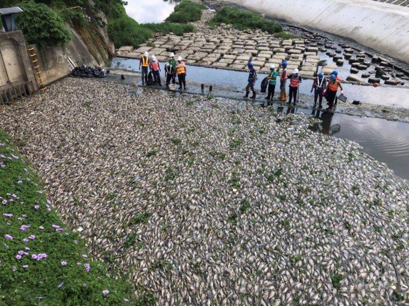 桃園市多條河川爆發大量魚群暴斃漂浮惡臭事件,令人怵目驚心。圖/市府水務局提供