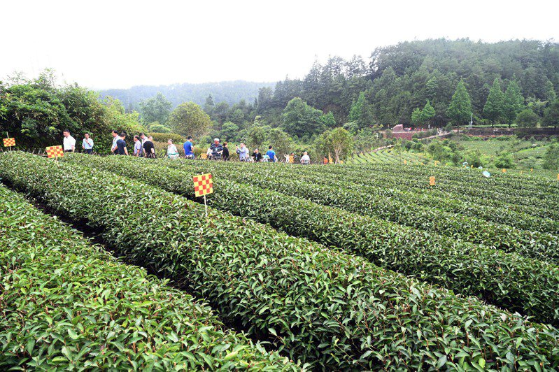 2021中國(武夷)「茶文化、茶產業、茶科技」統籌發展高峰會近日在福建南平舉行。圖為參會人員在武夷山燕子窠生態茶園示範基地考察。(新華社)