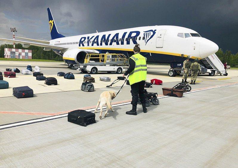 白俄羅斯明斯克機場安全人員廿三日出動嗅探犬,搜查被攔截迫降的瑞安航空班機旅客行李。(美聯社)