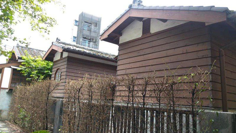 基隆市定古蹟「市長官邸」出現蟲害,成排羅漢松樹葉被幾百隻毛毛蟲啃食殆盡,宛如枯木。圖/正砂里長俞明發提供