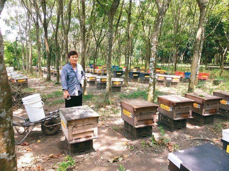 褪下警服後的鄭淑敏,經營起蜜蜂生態農場,成了一位掌管百萬蜜蜂的「養蜂人」。  ...