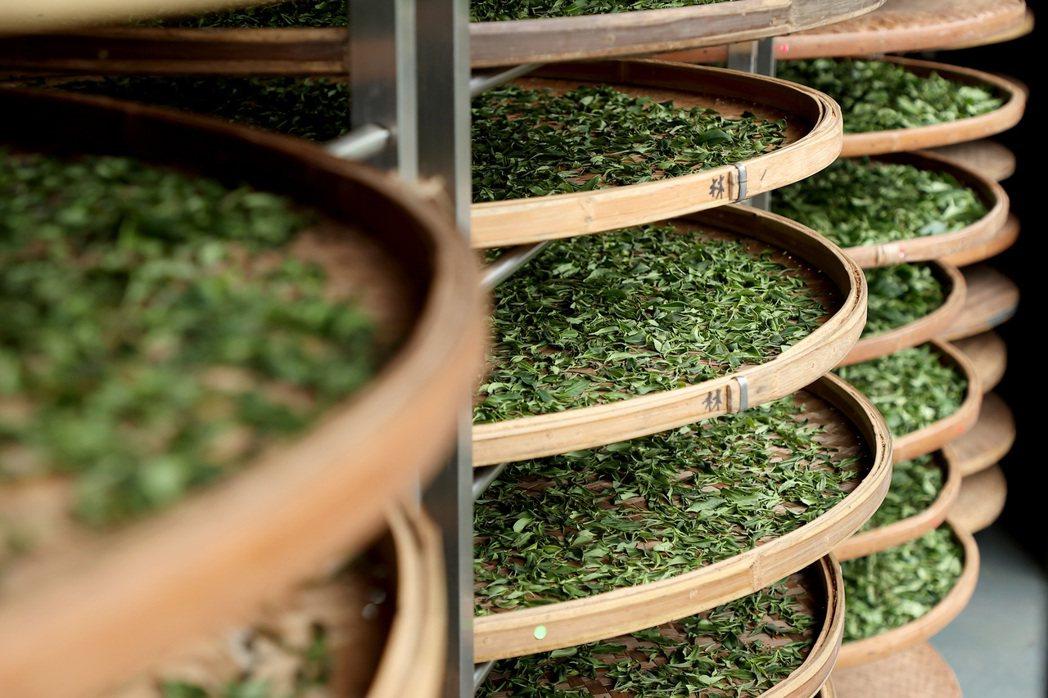 林憲能自學做茶,並在「前後象」頂樓蓋出一間面東南的小茶廠。攝影/余承翰