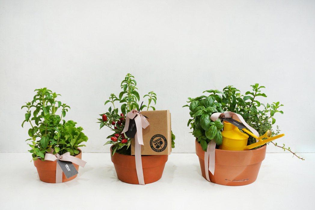 香草植物能入茶,也能成為餐桌上的綠意風景。圖/CNFlower西恩提供