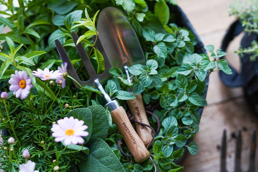 CNFlower推出Berry & Bird 兒童禮品盒裝,親子一起種植植物。圖...