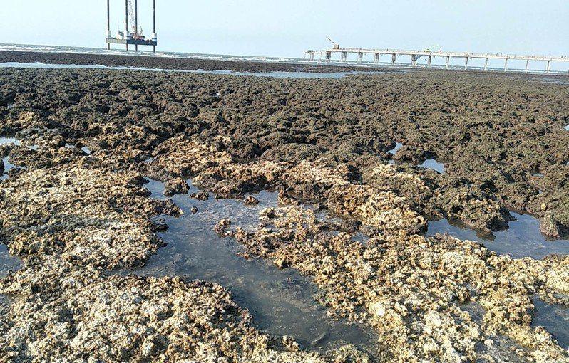 藻礁公投領銜人潘忠政表示,藻礁公投聯盟沒有能力做這方面的評估,但藻礁公投投「不同意」票的情勢高漲,看起來確實與政府提出外推方案,以及停電有關,藻礁公投聯盟再疫情當下,仍會透過線上網路方式,甚至線上講演方式,讓民眾了解藻礁公投聯盟的真正論述。本報資料照片