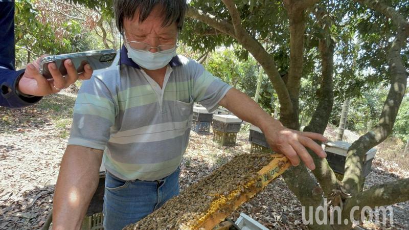 梅山鄉梅美養蜂場負責人吳金達養蜂超過50年,他說今年蜂蜜質量是近年最好,產量也提升超過1成。記者莊祖銘/攝影