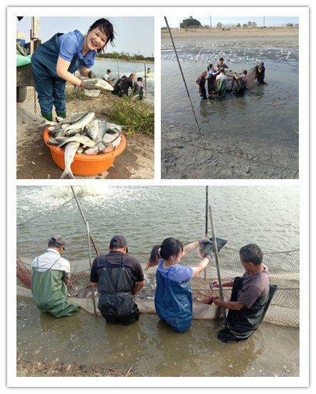 慧能智聯總經理宋婉甄(左上)及團隊,對漁業抱持使命感,對太陽光電具有高度熱情,以...