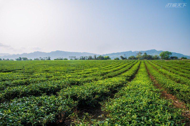 還能到離鹿野高台不遠處的龍田藝術茶園走訪茶的世界。