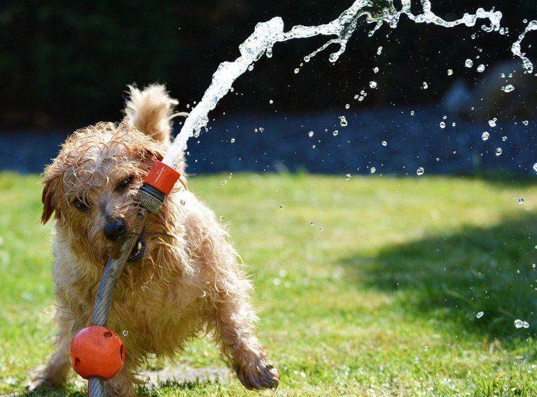 寵物夏天也要防中暑。圖/取自pixabay