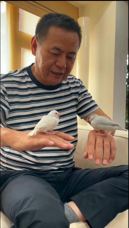 蔡振南把「觀音對我笑」劇中的白文鳥帶回家養,取名「蔡市仔」後又買另一隻「蔡鳥仔」...