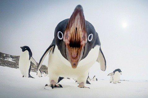全美最大的出版集團企鵝藍燈書屋宣布將以超過二十億美金的價碼併購規模排名第三的西蒙...