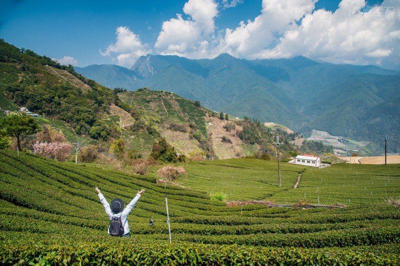 身處2千海拔山上,跟茶園一起深呼吸。