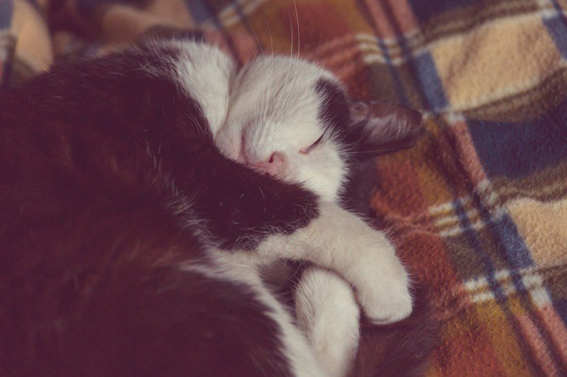一覺好眠,迎接神清氣爽的每一天。圖片來源/ingimage