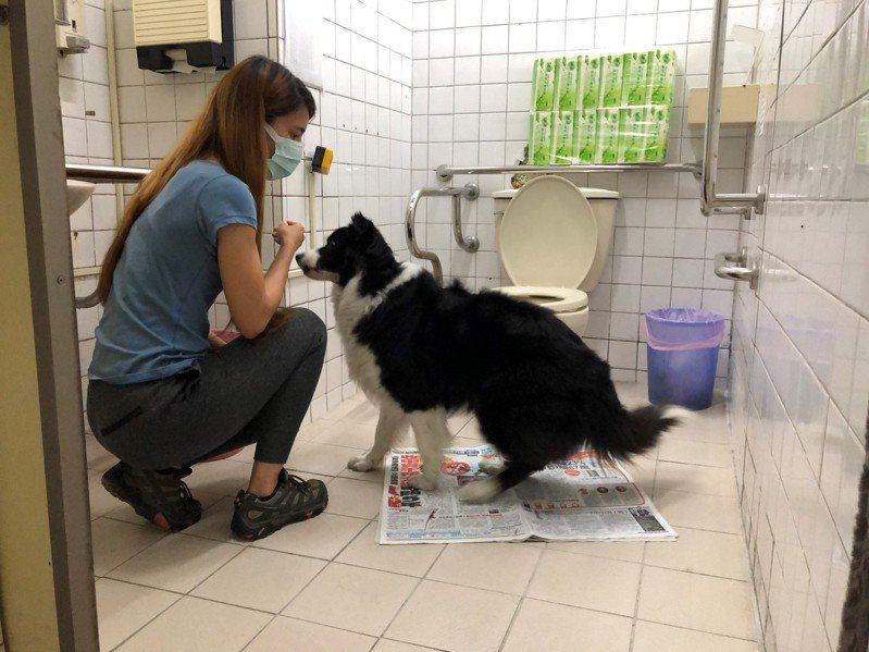動保處表示,當寵物在正確地點上廁所的當下,應立即給予鼓勵,如讚美的語氣或摸頭等。圖/新北市動保處提供
