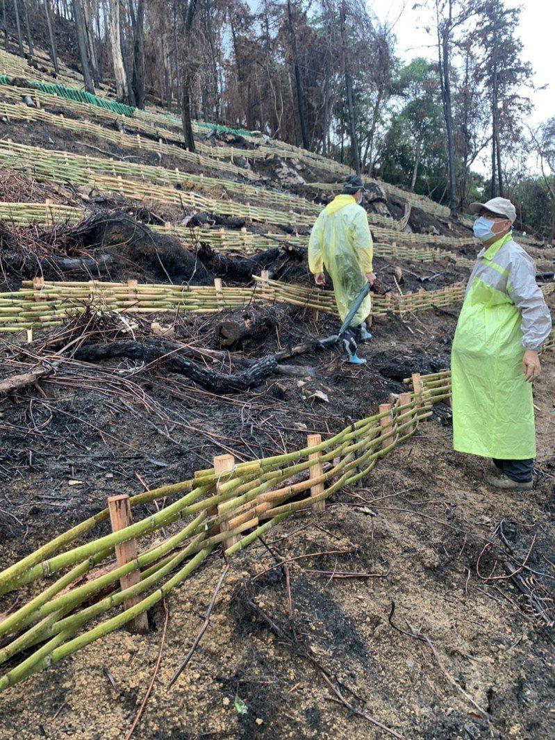 魚池尖山林火災後重生,公所、林管人員以土包袋截水、打樁、撒草種與鋪設草蓆等方式做緊急復原。記者黑中亮/攝影