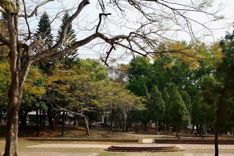 大樹成蔭成林的都會森林公園。