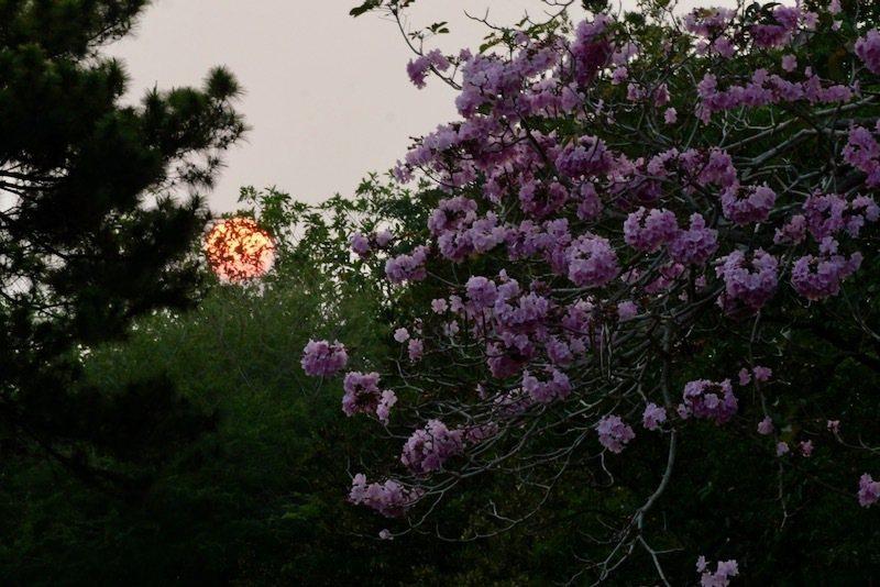 從射日塔上看夕陽