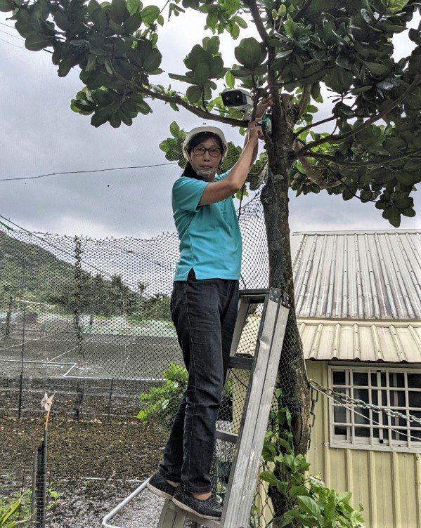 劉祖貞她在鄉間田地架設遠端監控感應器,用手機即可觀測。 圖/勞動部勞動力發展署高...