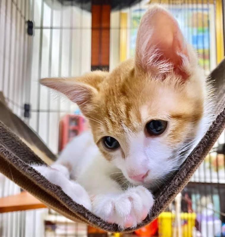 防疫期間,在家當貓貓的鏟屎官 😻