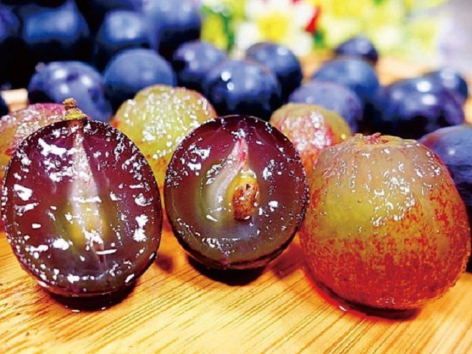 彰化大村小農阿明伯的巨峰葡萄,當日採當日寄最新鮮。 KLOOK /提供