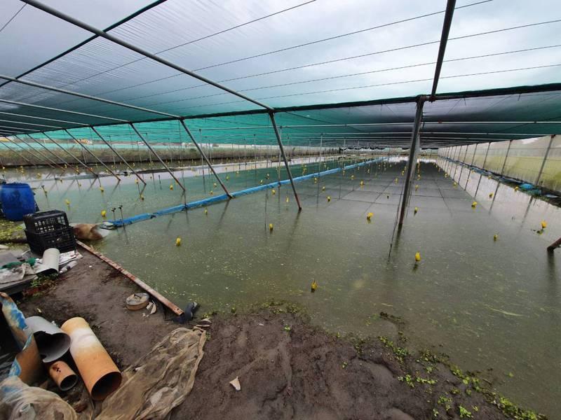 雲林西螺、二崙地區葉菜類受持續降雨、積水未退影響,低窪田區初估災損約2成。圖/雲林縣政府提供