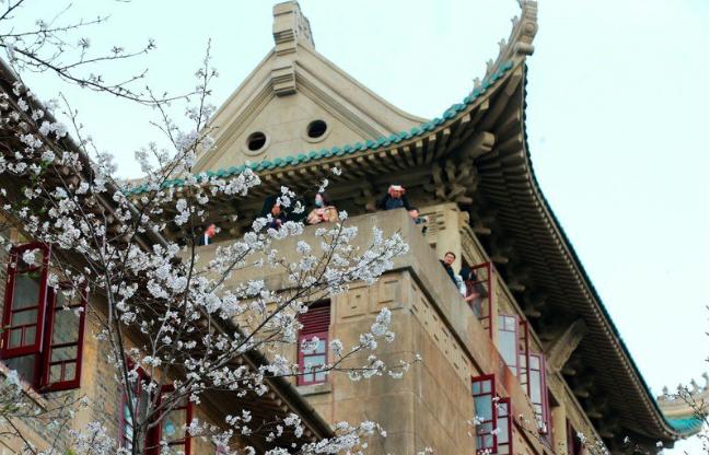 武漢發布460餘個台灣學生實習、就業職位。圖為櫻花綻放中的武漢大學。(新華社)