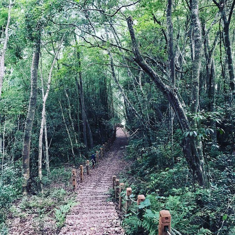 ▲芝生毛台山步道-綠色竹林。 (圖/lcloverseven,Instagram)