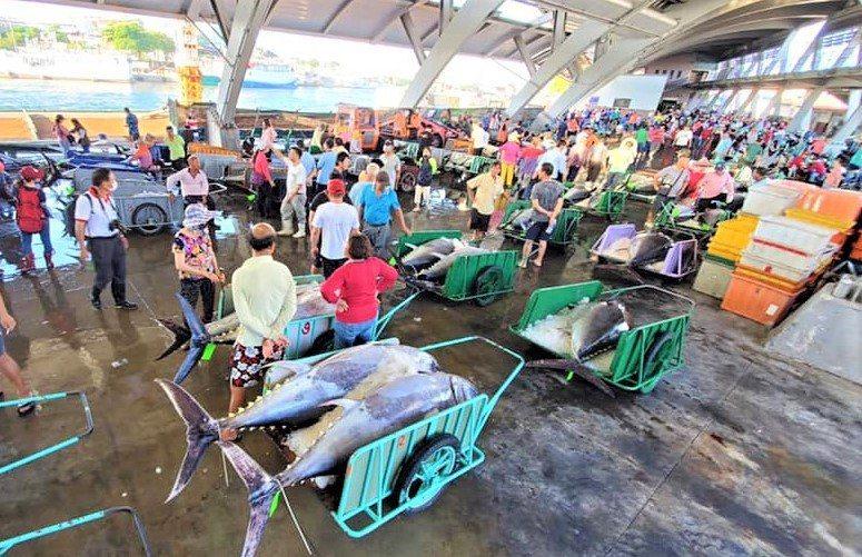 今年是屏東東港漁港黑鮪魚豐收年,嚴峻疫情造成市場供需失衡,拍賣價近期在低檔區徘徊,漁民心情鬱悶。圖/林漢丑提供