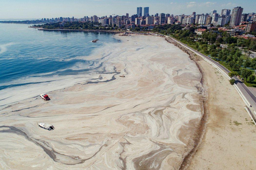 大量的黏液覆蓋在海面上會阻斷陽光,海中的魚類、貝類等生物都會受到影響而死亡,當地...
