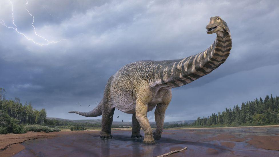 圖為新恐龍物種「南方泰坦巨龍」的構想圖。圖/澳洲昆士蘭博物館