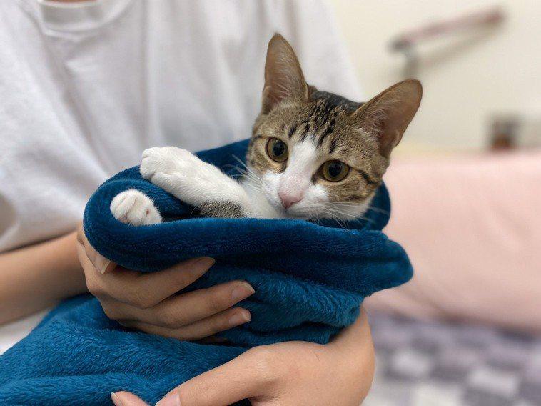 許多人養貓咪作伴,把牠當家人。記者陳弘逸/攝影