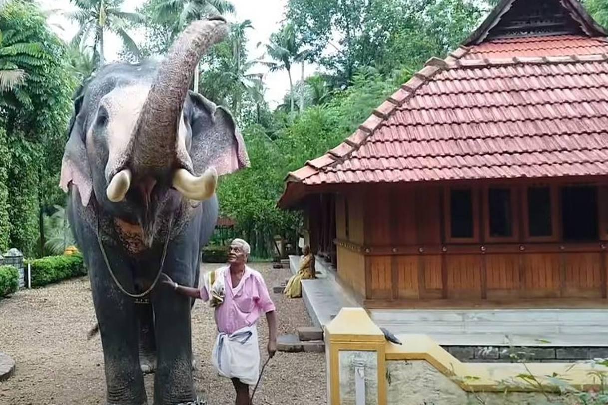 25年好搭檔不敵癌魔過世 大象徒步2小時遺體前揮鼻告別