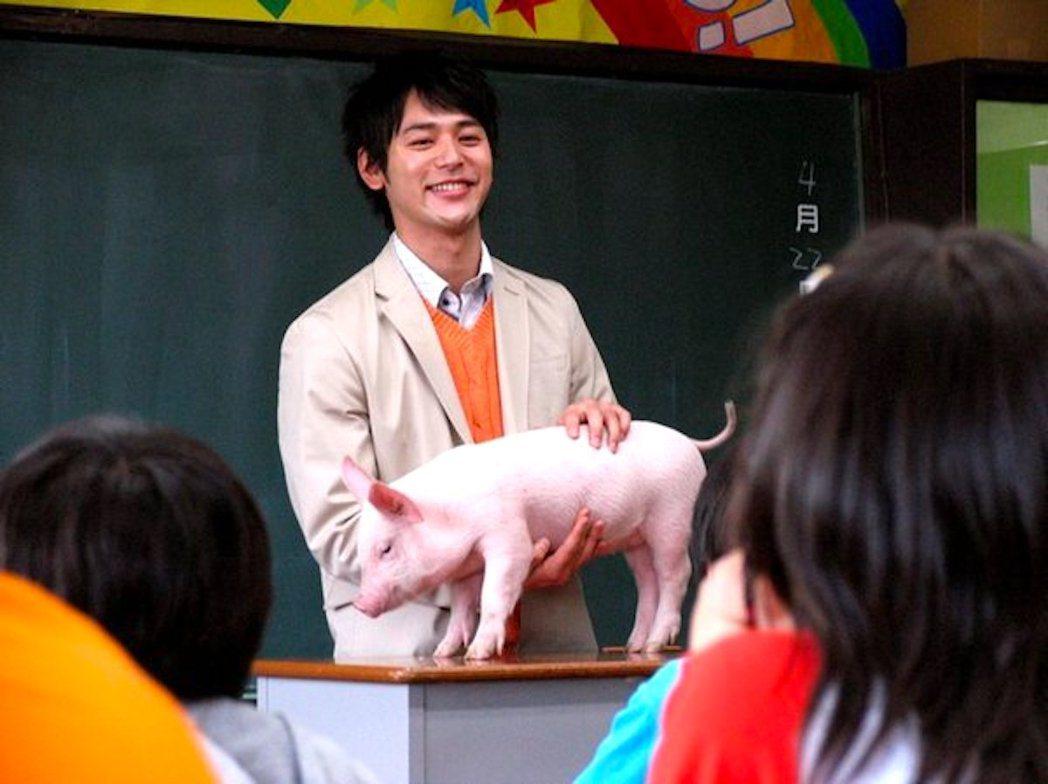 時任國小老師黑田恭史讓六年級學生飼養小豬,最後在畢業當天將小豬送去屠宰場。這個教...