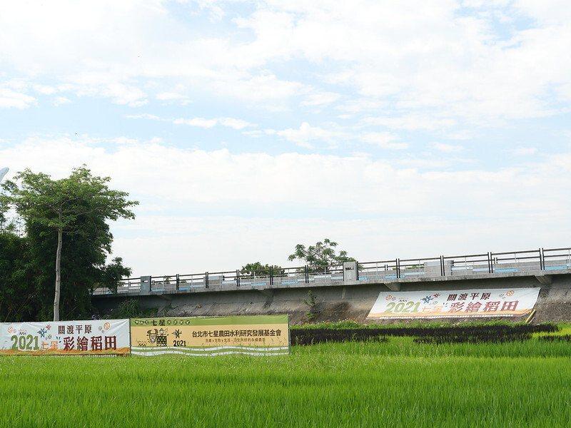 關渡平原2021彩繪稻田