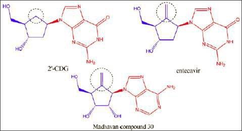 圖3. 2'-CDG、entecavir和Madhavan 30的化學結構 (圖片來源:判決書)