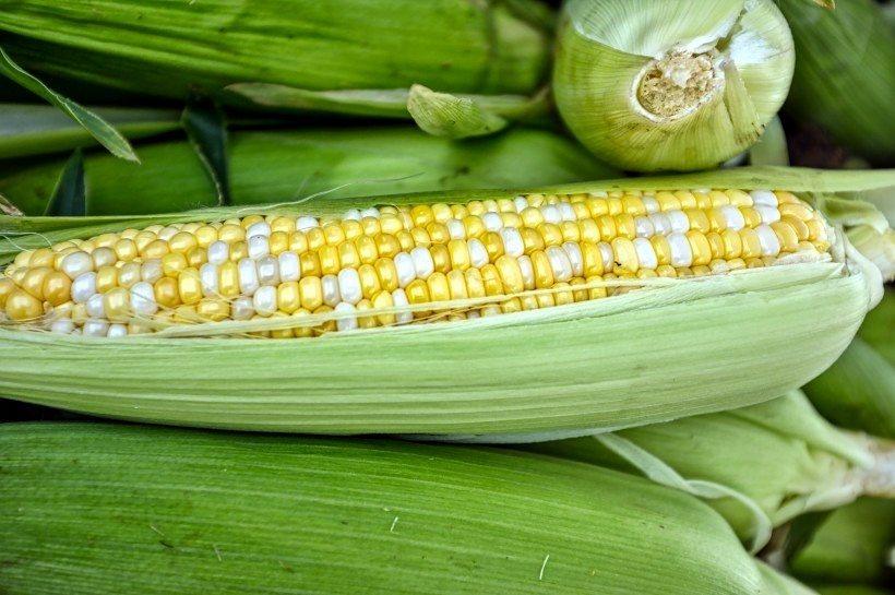 玉米甘甜鮮美,有水果玉米、甜玉米、糯玉米等,種類也豐富多樣,可以直接蒸、煮,燉,或製作各式點心、飲品、包餃子餡料等,吃法多樣且營養豐富。