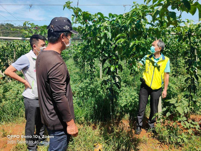 南投埔里是全國最大百香果產地,受乾旱影響,今年開花狀況不佳,果農向埔里鎮長廖志城(右)陳情,盼爭取補助。圖/埔里公所提供