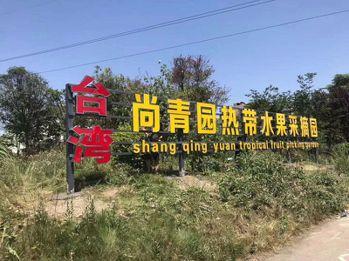 台商楊阿凱在四川成都栽種熱帶水果有成。(中新社)