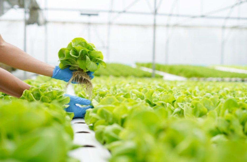 退伍沒事做,真的比有事做還難熬,種野菜、研究野菜,讓後半場人生更自在豐富。 圖/...