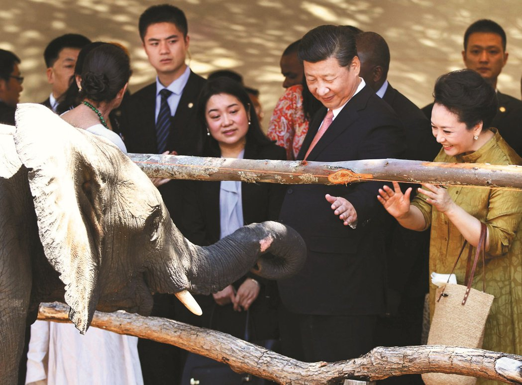 中國的雲南野象系列報導,近期開始出現討論「外媒如何關注」、「象群怎樣火到國際」,...
