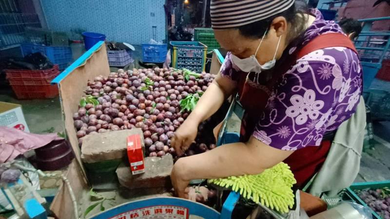高雄那瑪夏區、桃源區紅肉李產季來臨,果農進行品質篩選、裝箱。圖/高雄原民會提供