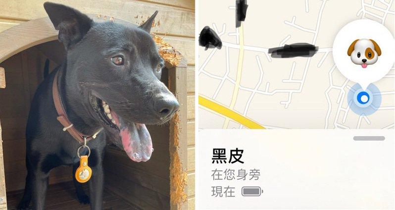 原po怕狗狗有個萬一,於是買了AirTags,收到後就興高采烈幫牠戴上。 圖/PTT